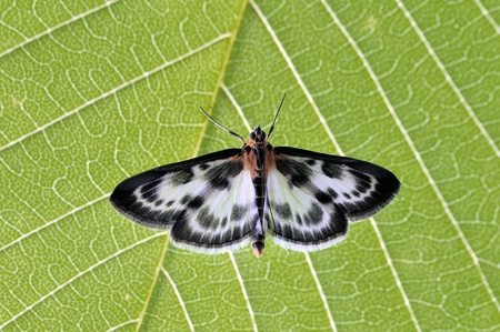 Butterfly on the green leaf, close-up. Green leaf background photo