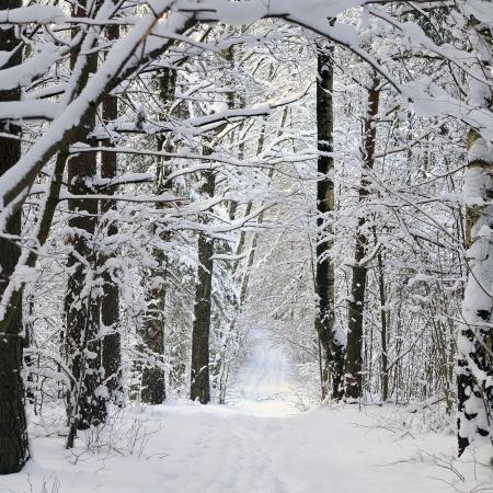 Frosty morning in winter forest   Stok Fotoğraf