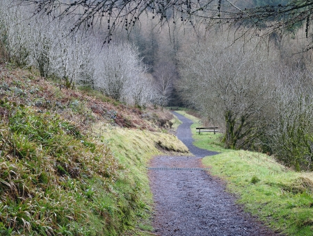 Footpath in Glenariff forest park  Early spring at North Ireland Stok Fotoğraf