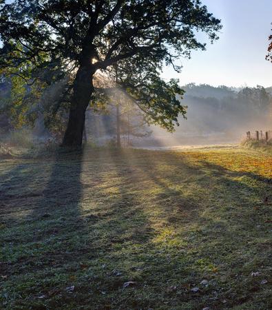 Autumn morning near Puckoriu cognitive-historical path. 版權商用圖片