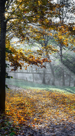 Autumn morning near Vilnele river. Early autumn morning near Puckoriu cognitive-historical path.