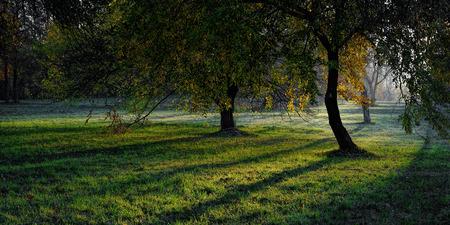 Manor garden in at cold autumn morning Stok Fotoğraf