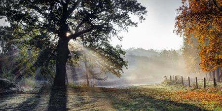 Sunshine and old oak. Early autumn morning near Puckoriu cognitive-historical path.