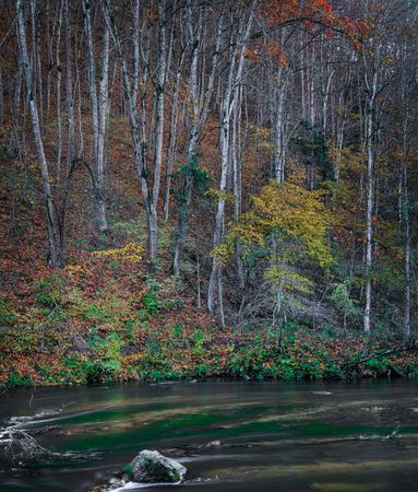 Autumn morning near Vilnele river. Puckoriu cognitive-historical path. Stok Fotoğraf