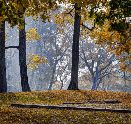 Beautiful autumn park and Asveja lake in Asveja Regional Park in the Lithuania
