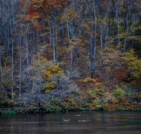 Puchkoriai Landscape Reserve. Golden autumn time near Vilnia river