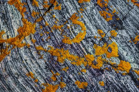 Lichens on a rock, near Atlantic road, Norway.