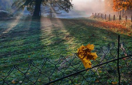Autumn morning near Puckoriu cognitive-historical path. Stok Fotoğraf
