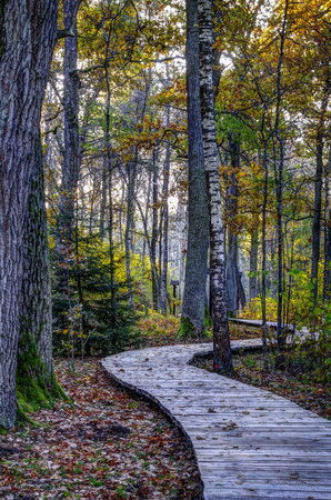 Wooden footpath at oak forest. Eearly morning in a autumn Stok Fotoğraf