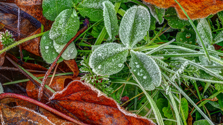 Covered hoar-frost  grass and plant leaves, late fall