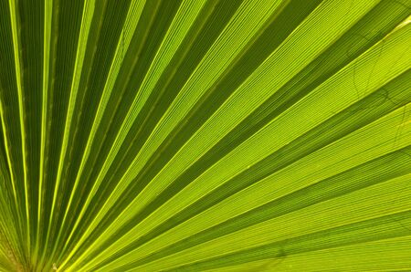 Palm leaf is texture Stock Photo