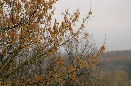 Autumn late