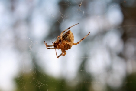 Spider with a booty on a spider web Stock Photo