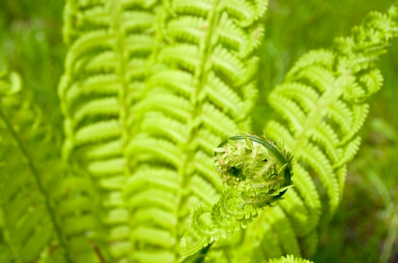 Fern Stock Photo - 15793339