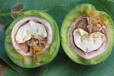 Split walnut in a green skin Stock Photo