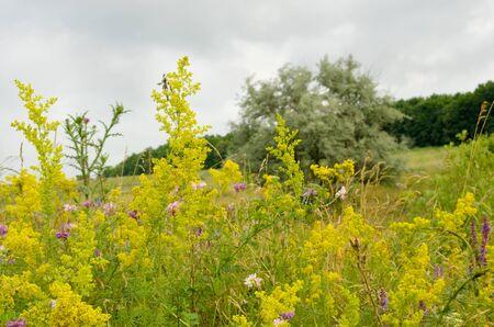 Flowers the field