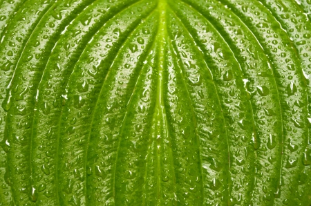 Leaf is green in drops