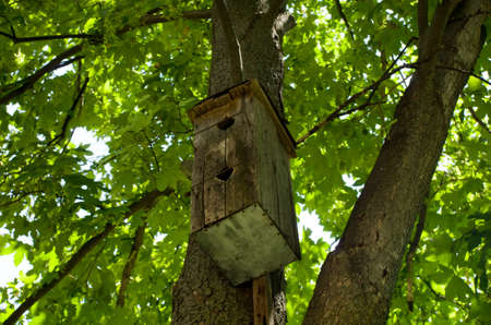 Starling-house on a tree Stock Photo