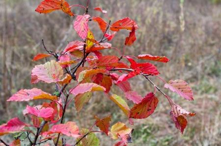 Sprig autumn