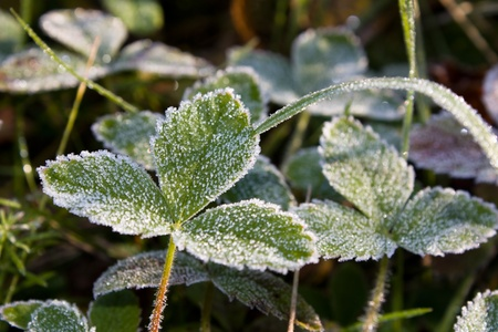 Hoarfrost on a leaf Stock Photo