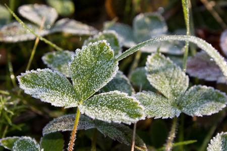 Hoarfrost on a leaf Archivio Fotografico