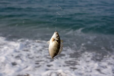 Fish on a hook Stock Photo - 16154785