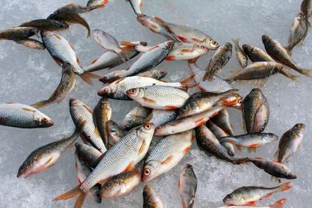 Cattura di pesce sul ghiaccio