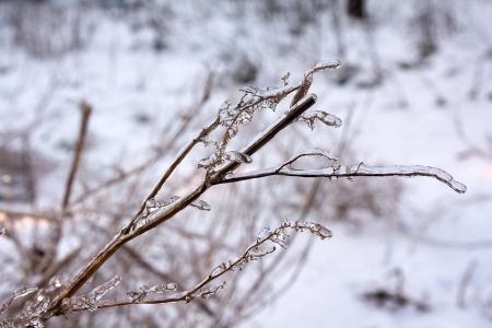 Icing grass up Stock Photo - 16260143