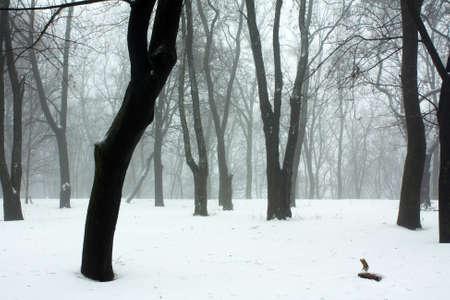 Misty foresta Archivio Fotografico