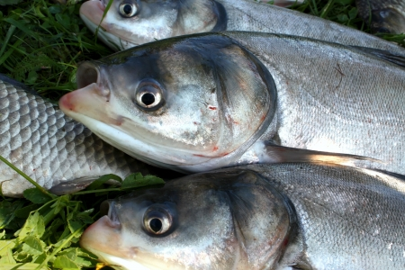 fished: Fished for fish on a grass