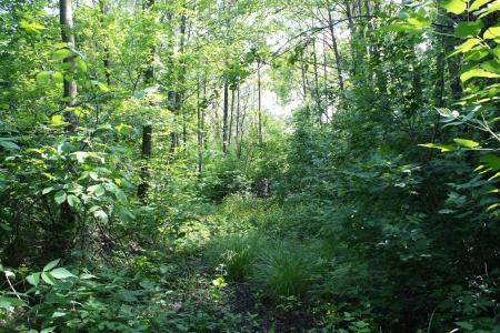 Estate foresta Archivio Fotografico