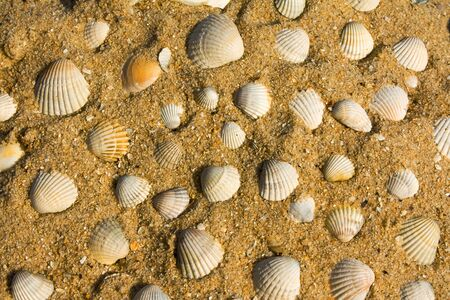 Seashells on sand photo