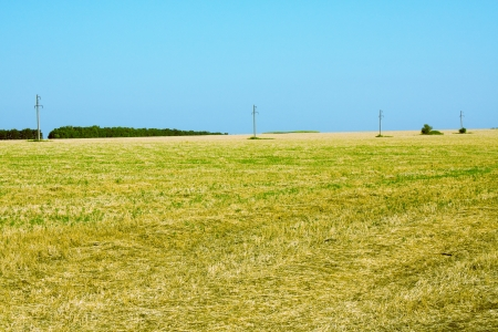 Mowed field photo