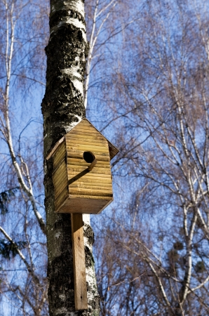 Starling house on a birch Stock Photo