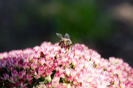Bee on small bright flowered