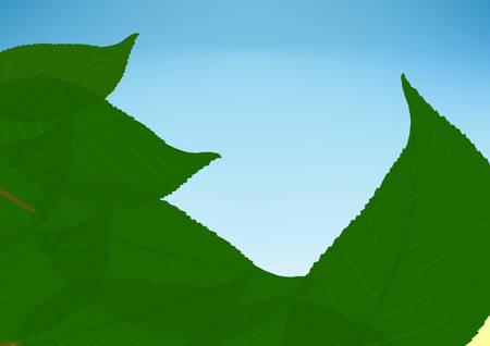 Leaves on a background sky Illustration