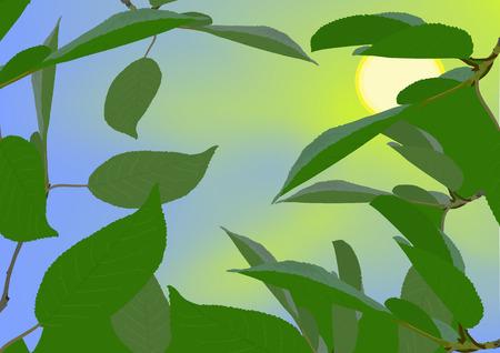 Sun after a foliage
