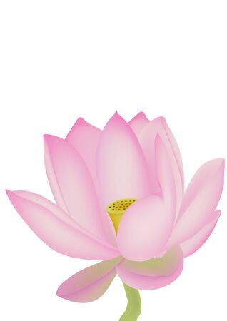 zen like: Lotus isolated on a white background