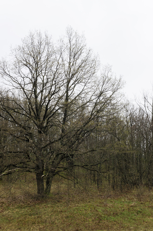 Spring tree without leaves on the hillside Stock Photo