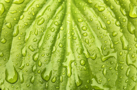 Drops of water on a green leaf Stock Photo
