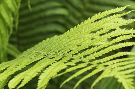 Patterned fern leaves, background