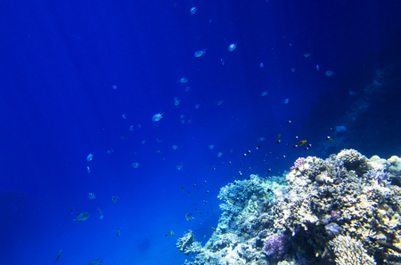 A lot of coral fish near the reef Stock Photo