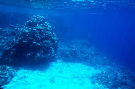 Underwater landscape with corals