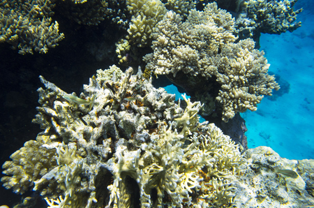 Reef rocks from corals in the sea
