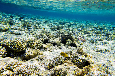 Underwater landscape of the coral bottom with fish Stock Photo