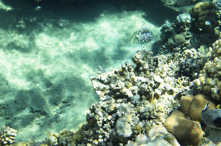 Corals in the background of the bottom of the underwater