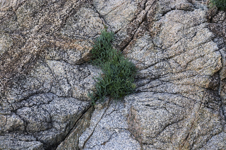 The plant grows in a crack on the rock Banco de Imagens