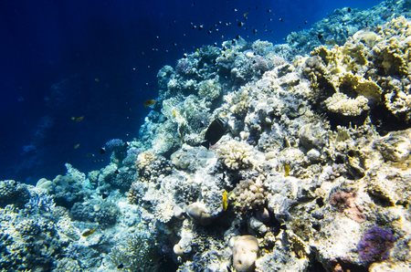 The ridge of the coral reef in the Red Sea