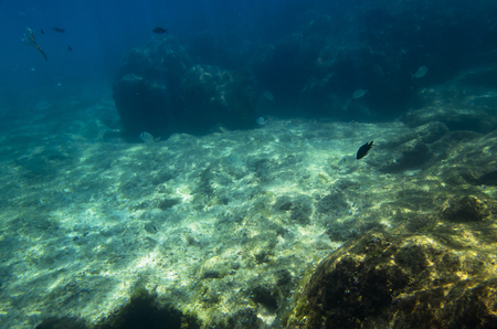 Underwater landscape with fish at the bottom