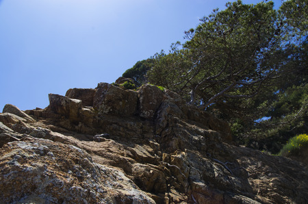 The tree grows on a stone slope